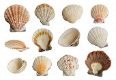stock photo of beach shell art  - Collection Sea shells isolated on white background - JPG