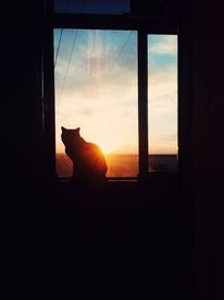 picture of moon silhouette  - dark room in the silhouette of a cat sitting on a sunset - JPG