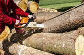 pic of sawing  - Man sawing a log in his back yard with orange saw - JPG