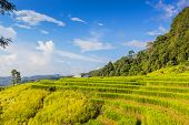 picture of ifugao  - Landscape shot paddy field and beautiful sky - JPG