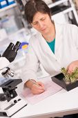 image of modifier  - woman study of genetic modified GMO plants in the laboratory - JPG