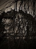 picture of scary haunted  - Scary branches dry tree and haunted house. photos in a mystical way.