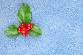 pic of aquifolium  - European Holly  - JPG
