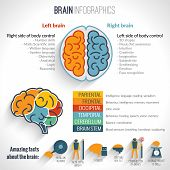 foto of left brain  - Brain structure left analytical and right creative hemispheres infographics set vector illustration - JPG
