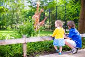 stock photo of zoo  - Happy school boy and his toddler sister cute little girl with curly hair wearing a dress having fun together in a zoo watching giraffes and other animals on a day trip during summer vacation - JPG