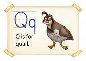 foto of quail  - A letter Q for quail on a white background  - JPG