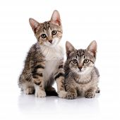 Постер, плакат: Two Striped Kittens