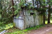 pic of wooden shack  - Overgrown wooden shed in a forest in the Pyrenees in France - JPG