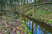 stock photo of wetland  - Forest wetlands - JPG