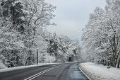 stock photo of polonia  - Winter road lined with trees in Poland - JPG