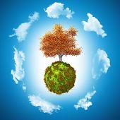 foto of walnut-tree  - 3D render of a walnut tree on a grassy globe - JPG
