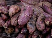 stock photo of solanum tuberosum  - purple yam burn - JPG