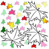 foto of canada maple leaf  - Maple leaves on a white background - JPG