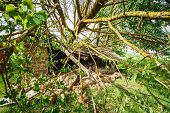 stock photo of hurricane wind  - Old Barn Damaged By Recent Hurricane - JPG
