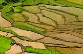 picture of nasi  - Rice terraces in Tana Toraja South Sulawesi Indonesia - JPG