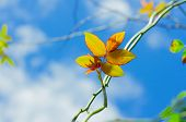 picture of creeper  - The Green Creeper Plant on background sky - JPG