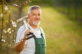 stock photo of spade  - Portrait of a handsome senior man gardening in his garden - JPG