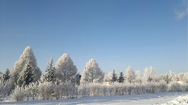 stock photo of siberia  - Winter Siberia Taiga snow frost ice Christmas snowfall - JPG