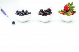 pic of modification  - Genetic Modification blueberry blackberry strawberry fruit modification gene needle - JPG