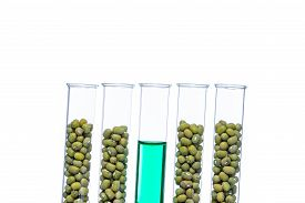 image of modifier  - Mung Bean genetically modified Plant Cell biotechnology - JPG