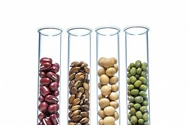 picture of modifier  - Legume with Wheat genetically modified Plant Cell science - JPG