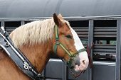 picture of horse plowing  - A draft horse is pictured next to a horse trailer - JPG