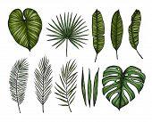 Hand Drawn Vector Illustrations - Palm Leaves (monstera, Areca Palm, Fan Palm, Banana Leaves). Tropi poster