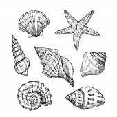Hand Drawn Sea Shells. Starfish Shellfish Tropical Mollusk In Vintage Engraving Style. Seashell Isol poster