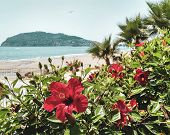 Summer Beach Coastline. Beautiful Blue Sea With Mountains And Flowers. Island Without People. Cleopa poster