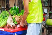 Kind Male Owner Feeding Cute Hungry Cats Pet Food At Street Food Fruit Market. Animal Care, Adoption poster