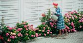 Happy Woman Gardener With Flowers. Flower Care And Watering. Soils And Fertilizers. Greenhouse Flowe poster
