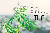 Tetrahydrocannabinol Molecule Formula Background With Marijuana. Molecular Structure Thc poster