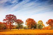 stock photo of fall day  - Colorful autumn trees landscape fall season - JPG