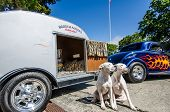 Two dogs pose in front of a vintage trailer