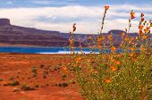 image of potash  - Wild Flowers near Evaporation Pools with La Sale Mountains in the Back against beautiful blue sky  - JPG