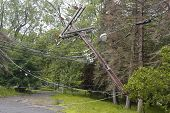image of fallen  - Fallen tree damaged power lines in the aftermath of  severe weather and tornado in Ulster County - JPG