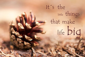 stock photo of cone  - Fir Cone with the Saying Its the Little Things That Make Life Big as Autumn Background - JPG