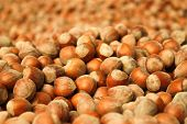 pic of ground nut  - hazelnuts background composed by many nuts laying on the ground