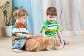 stock photo of child feeding  - two children boys feeding red cat indoors - JPG