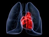 lung and heart
