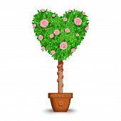 picture of flower pots  - Heart shape tree in flower pot - JPG