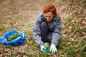 picture of nettle  - Farmer woman picking fresh nettle leaves with protection gloves - JPG