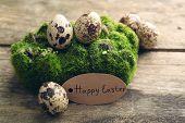 picture of bird egg  - Bird eggs on moss on wooden background - JPG