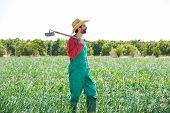 foto of hoe  - Farmer man with hoe looking at his orchard field with hat - JPG
