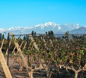 picture of andes  - Volcano Aconcagua Cordillera and Vineyard - JPG