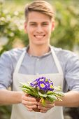 image of flower pot  - Male florist holding flower pot in flowers shop - JPG