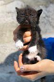 image of homeless  - Little black homeless kitten in the hands of a volunteer - JPG