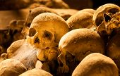 picture of catacombs  - Multiple skulls in fontanels cemetery - JPG