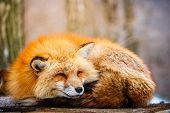 sleepy poster