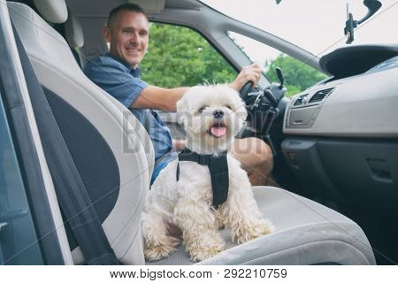poster of Small dog maltese in a car his owner in a background. Dog wears a special dog car harness to keep hi